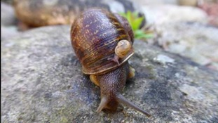 Jeremy the snail who struggled to find love has died