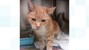 Can you help this elderly cat find his owner?