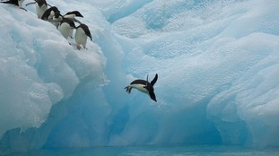 WWF have called on the waters off East Antarctica to be protected.