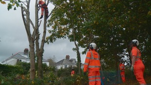 Network Rail teams tackling trees beside the railway line