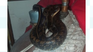 Man found 8ft snake in airing cupboard