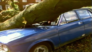Tree crushing a car.