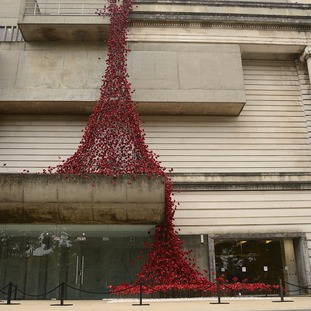 The poppies flow down the side of the building.