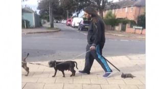 Puppy dragged along street in Norfolk - but his abuser can still own dogs