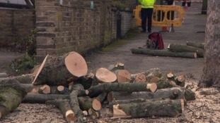 Protests over tree felling in Sheffield are continuing
