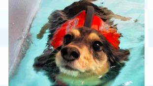 Poppy the dog taking a swim