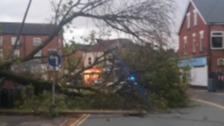 Tree blown over