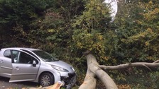 A tree brought down an overhead line on the Upper Malone Road in Dunmurry.