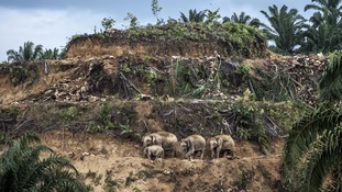 Palm-oil survivors by Aaron Gekoski, winner of the Wildlife Photojournalist: Single image category