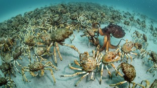 Crab surprise by Justin Gilligan, winner of the Behaviour: Invertebrates.