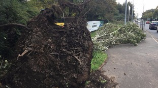 A tree blown down in the aftermath of Storm Ophelia.