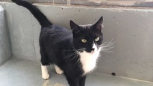 RSPCA seeks home for cattery's two most ignored cats