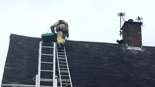 The firefighter that rescued a cat from a two-storey house has been dubbed the 'cat whisperer'
