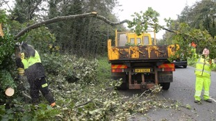 Fallen trees being cleared