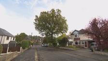 Charity bids to save historic Sheffield tree from chop