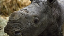 Rare white rhino born at Cotswold Wildlife Park & Gardens