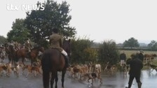 National Trust considers ban on trail hunting