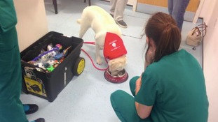 Last year's Pet Blood Bank event