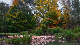 Washington Wetland's bid to become Europe's first solar-powered flamingo house