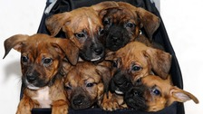 Animal centre wants foster carers for dogs and puppies