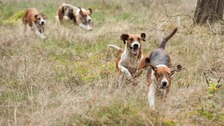 Vote could ban hunting from all National Trust land