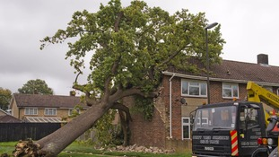 Family-of-five's home nearly demolished by huge oak tree