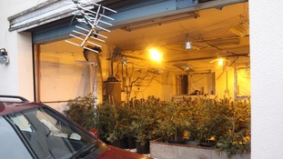Homeless immigrant jailed after cannabis factory discovery