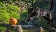 Keepers find new and imaginative ways to ensure animals continue to explore for food