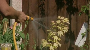 Hosepipe head spraying water on plants