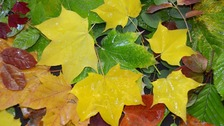 Coloured leaves on the ground