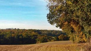 Autumn coloured field