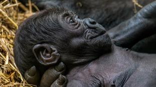 Shaun Wilson/Blackpool Zoo
