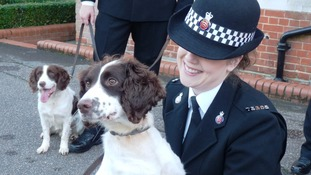 Stansted airport recruits two more police dogs to help detect explosives