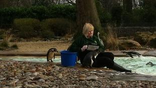Inside London Zoo's penguin enclosure.