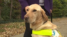 Dennis the guide dog is a lifeline for his owner.