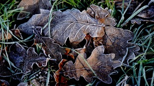 Icy autumn leaves