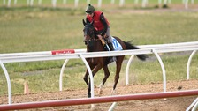 Nakeeta in training ahead of the Melbourne Cup