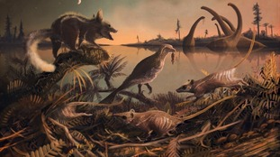 Rat-like fossils of oldest known human ancestors discovered in Dorset