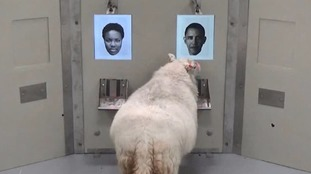 That be Baa-rack Obama!