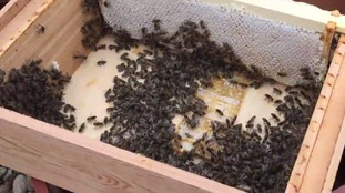 The bees that live on the roof of The Printworks
