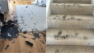 Zeb managed to paint every section of carpet, the sofa, stairs, walls and even the family dog with the paint.