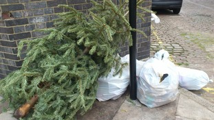 Discarded Christmas tree in London.