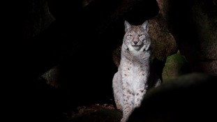 Lynx shooting should come as 'stark warning' says farmers union