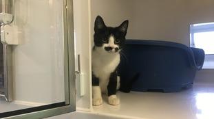 Meet the kitten who looks like moustached Poirot
