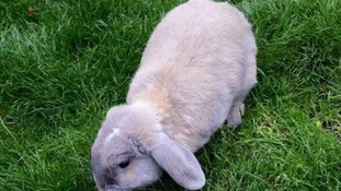 Caspar the rabbit was taken from his hutch and killed