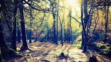 Plymbridge Woods