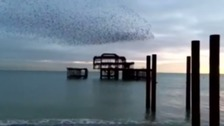 Thousands of starlings swoop on Brighton...