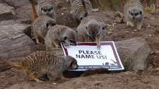 Dudley Zoo want customers to name 13 of their meerkats which currently do not have a name.