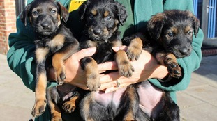 Three of the abandoned pups, which have now found permanent homes.