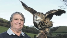 Guess 'hoos' back! Stolen eagle owl flies home